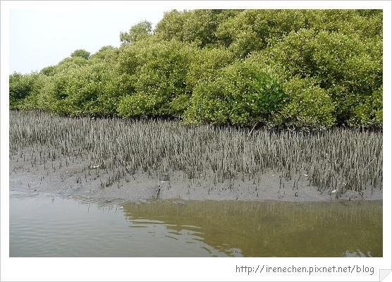 坐船遊台江17-紅樹林生態.jpg