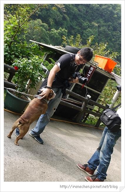 天空步道04-熱情的狗狗.jpg