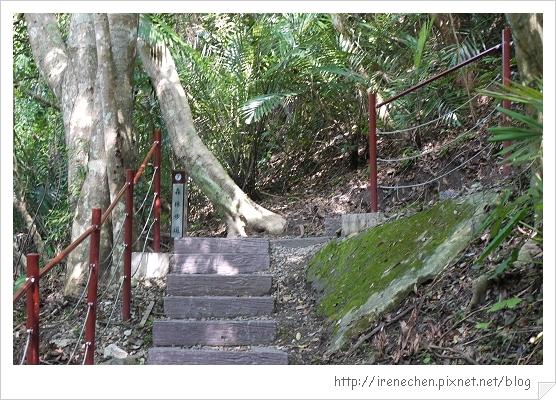 天空步道30-森林步道.jpg