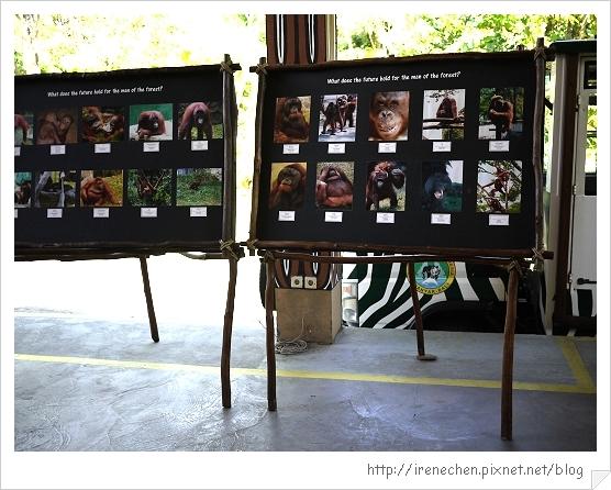 Bali314-野生動物園(動物叢園歷險記專車等侯區).jpg