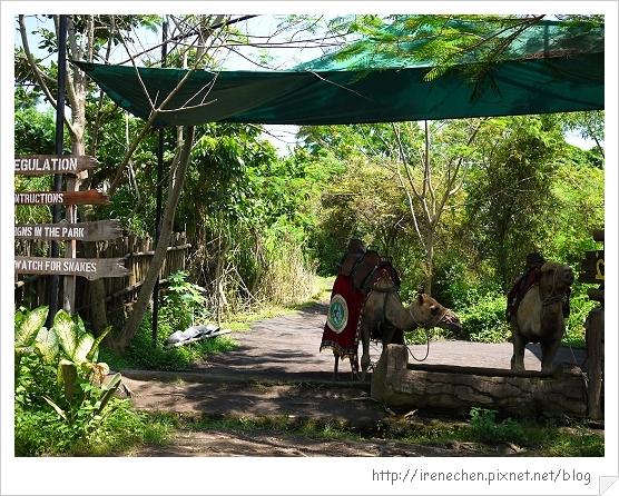 Bali354-野生動物園(騎駱駝).jpg