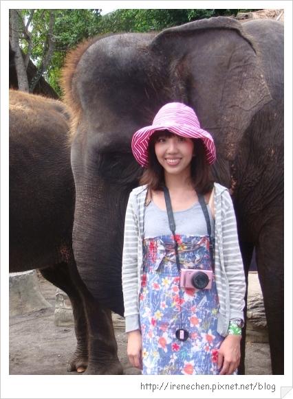 Bali365-和大象合照.jpg