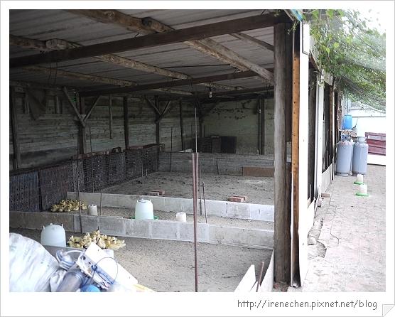 新屋鵝肉12-小小鵝的家.jpg