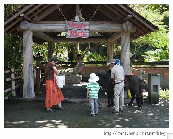 Bali310-野生動物園(騎小馬).jpg