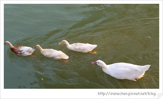 台中公園04.jpg