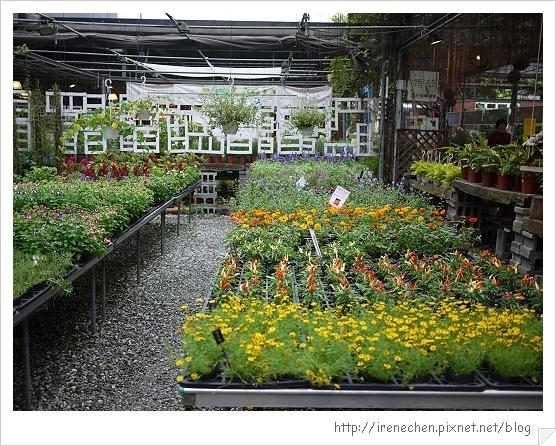 台北花卉村26-花田1.jpg