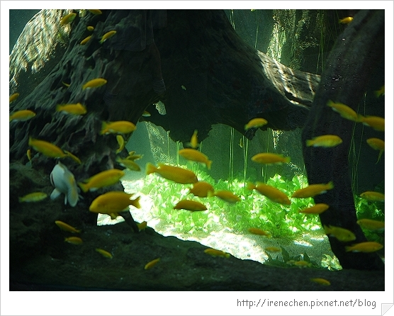 Bali306-野生動物園(水族區).jpg