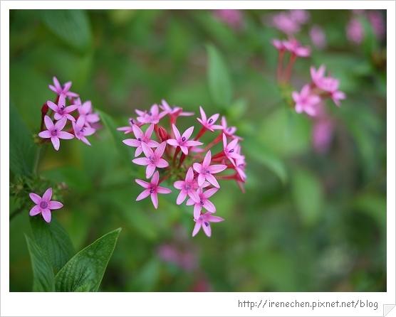 心之芳庭47-我愛拍花.jpg