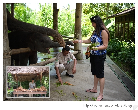 Bali348-野生動物園(餵大象).jpg