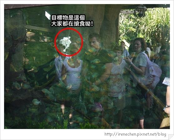 Bali305-野生動物園(餵食秀).jpg