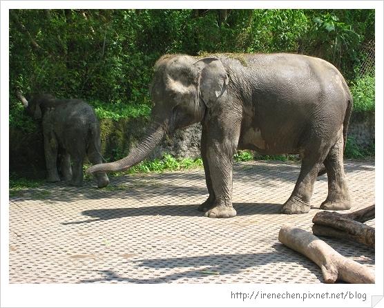 Bali334-野生動物園(大象).jpg