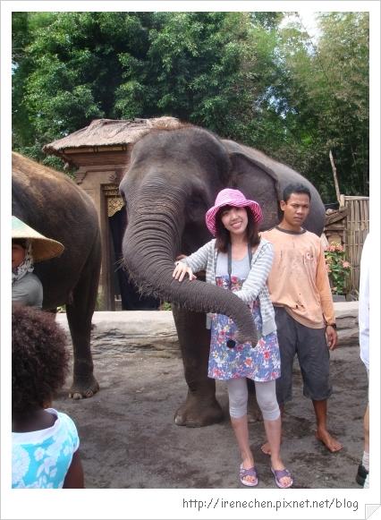 Bali364-和大象合照.jpg