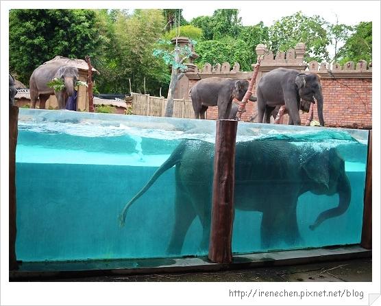 Bali353-野生動物園(大象在洗澡).jpg