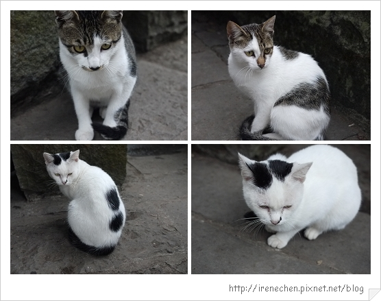觀音山-硬漢嶺上的貓.jpg