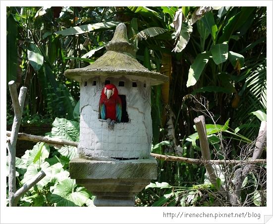 Bali357-野生動物園(鸚鵡).jpg