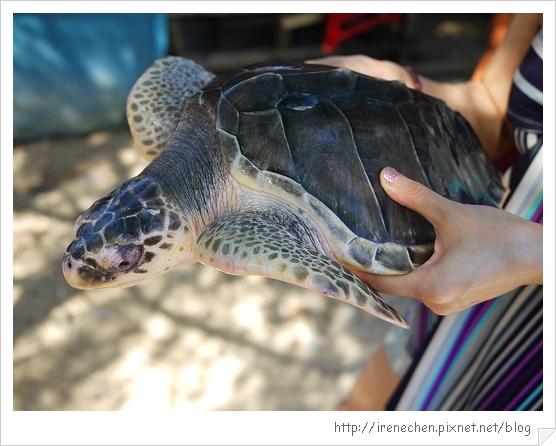 Bali232-海龜在海龜島.jpg