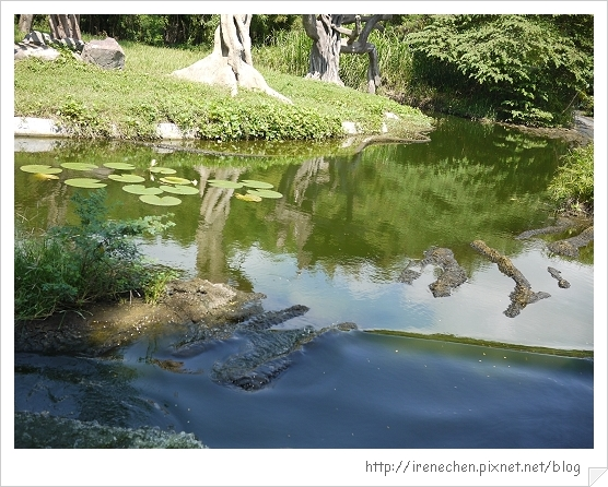 Bali321-野生動物園(車車也能涉水而行).jpg