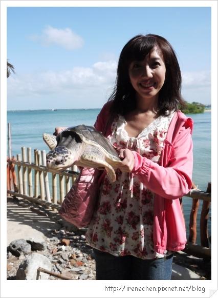 Bali234-抓海龜.jpg