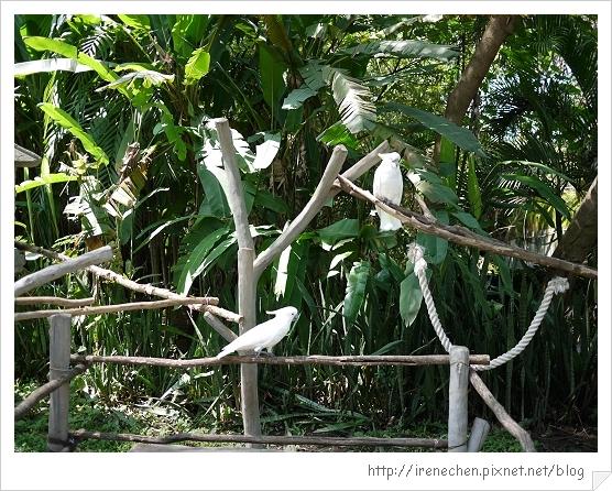 Bali358-野生動物園(白鳥).jpg