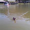 20141206 小西湖_2574.jpg