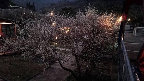 20150117-18 梅林親水岸_2272.jpg