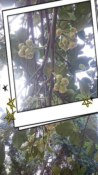 17-04-26-16-16-51-384_deco[1].jpg