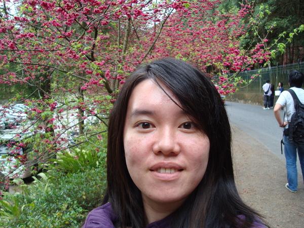 是我_後面整排的櫻花.JPG