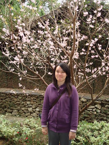 是我_與粉紅櫻花 1.JPG