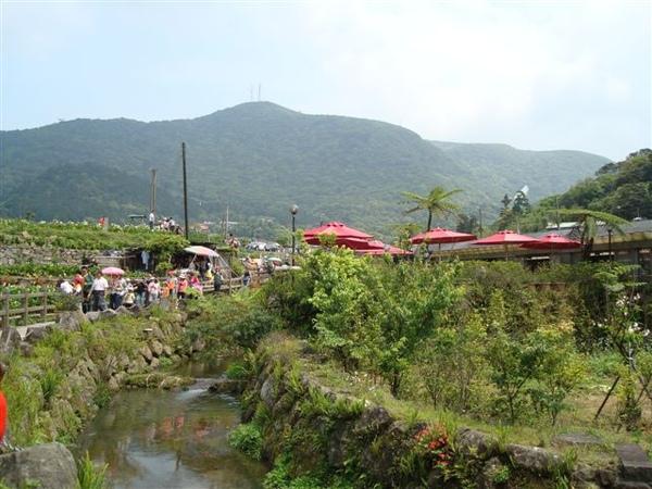 竹子湖一景5.JPG