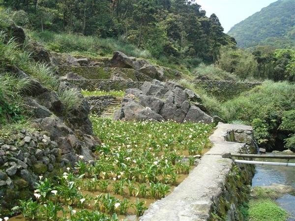 竹子湖一景7.JPG