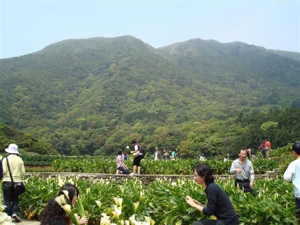 竹子湖一景8.JPG