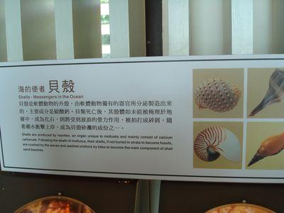 砂島貝殼砂展示館14_成分_貝殼.JPG
