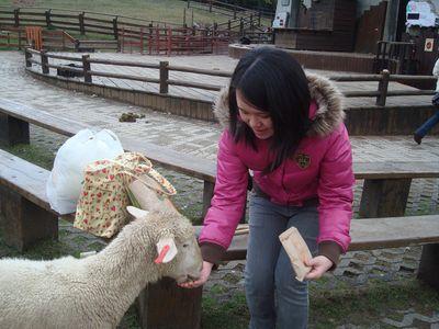 是我37_餵羊中.JPG