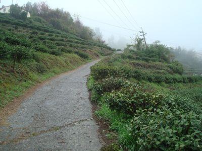 清境DAY1-8_茶園步道.JPG