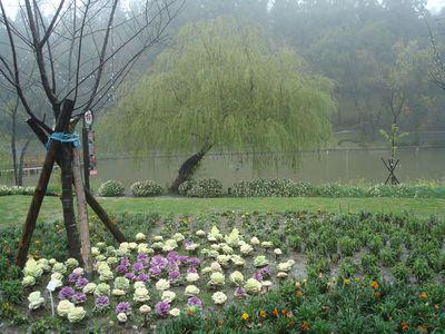 清境DAY2-12_小瑞士花園.JPG