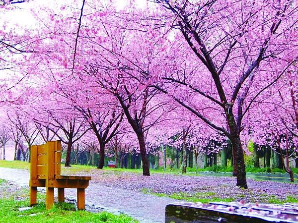 武陵農場櫻花祭.jpg