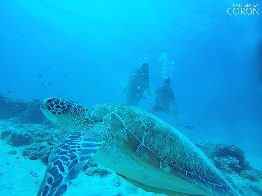 海龜2.png