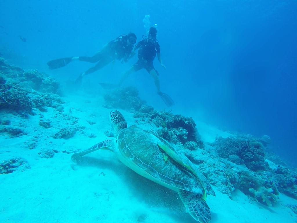 海龜1.png