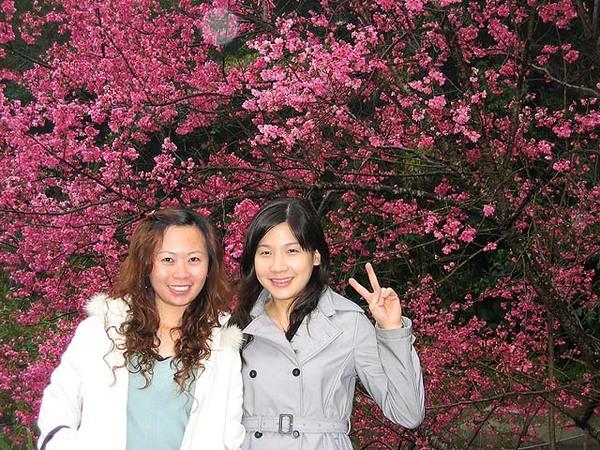 烏來櫻花祭 022.jpg