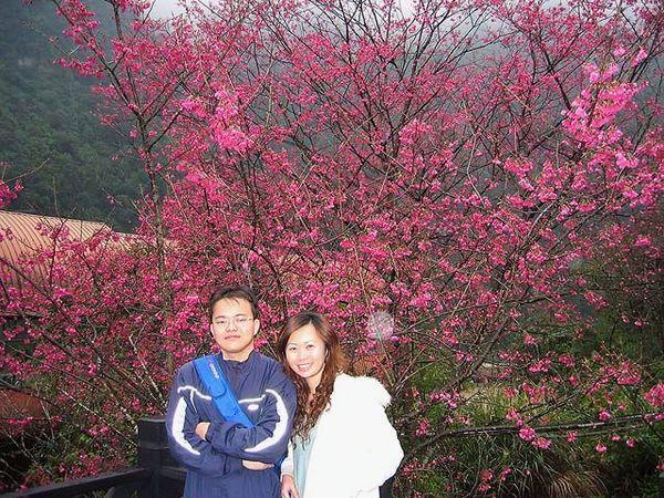 烏來櫻花祭 051.jpg
