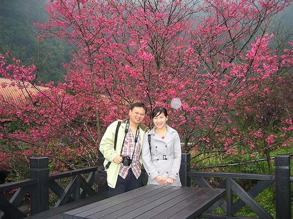 烏來櫻花祭 053.jpg