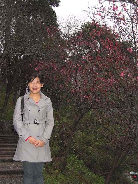 烏來櫻花祭 063.jpg