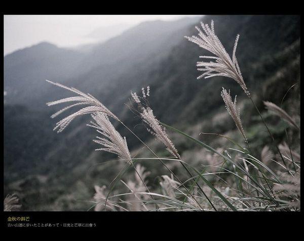 草嶺7.jpg