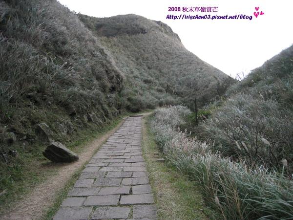 賞芒3-啞口.jpg