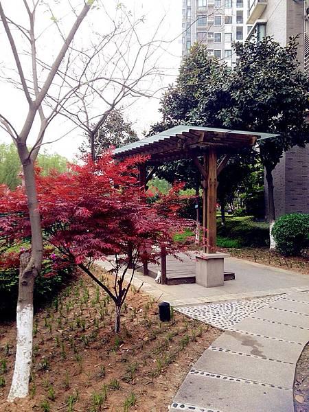 圖2 我南京住家的社區花園,走出花園便是秦淮河堤。