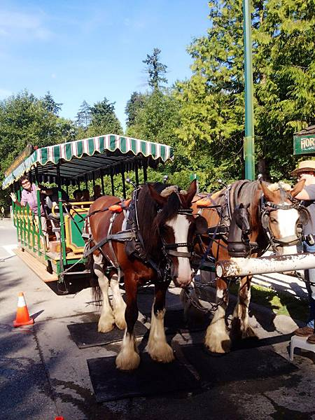 圖6 我帶媽到溫哥華史丹利公園坐馬車