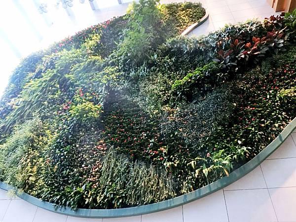圖22 美麗又壯觀的大面植物牆