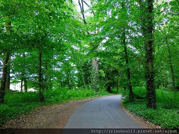 圖23 樹林路之二.jpg