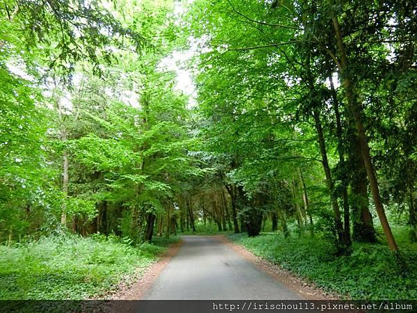 圖24 樹林路之三.jpg