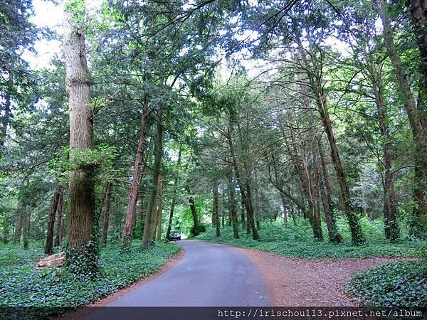圖25 樹林路之四.jpg